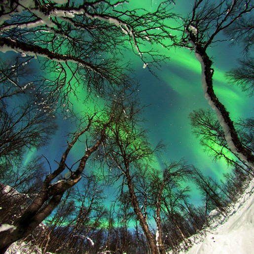 Space Storms & the Polar Aurora